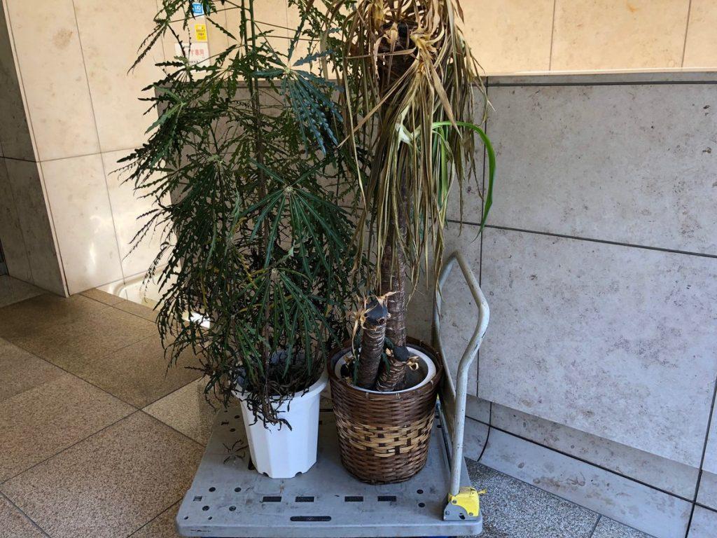 観葉植物の廃棄回収事例
